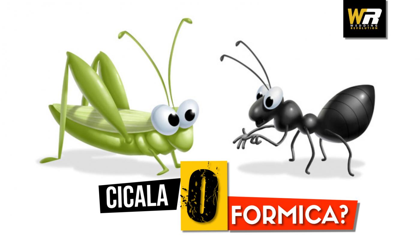 19 - MN - CICALA O FORMICA